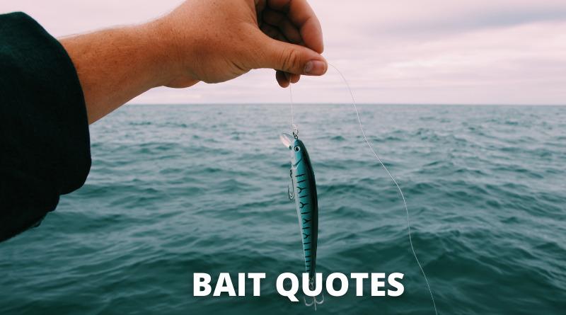 Bait quotes featured