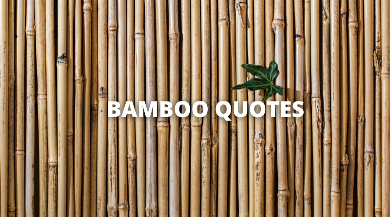 Bamboo quotes featured