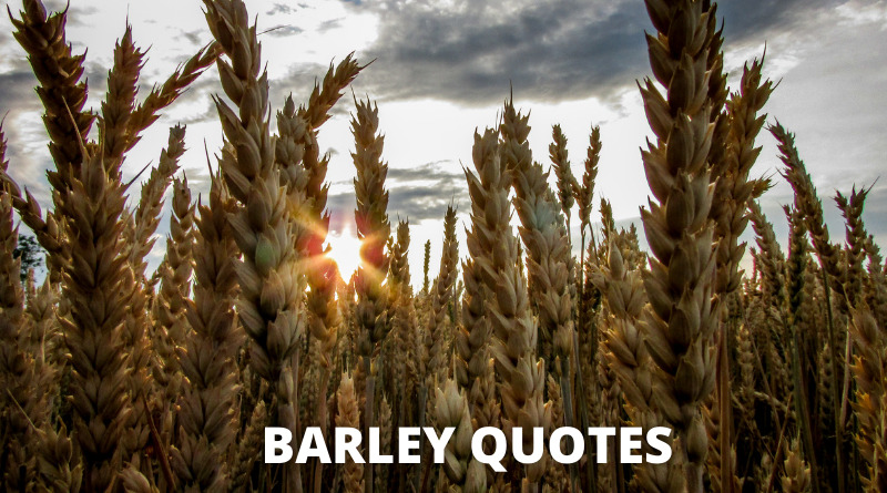 Barley quotes featured