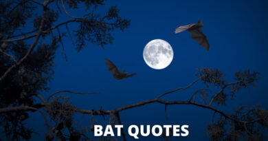 Bat quotes featured