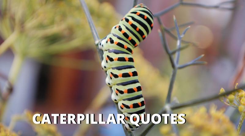 Caterpillar quotes featured