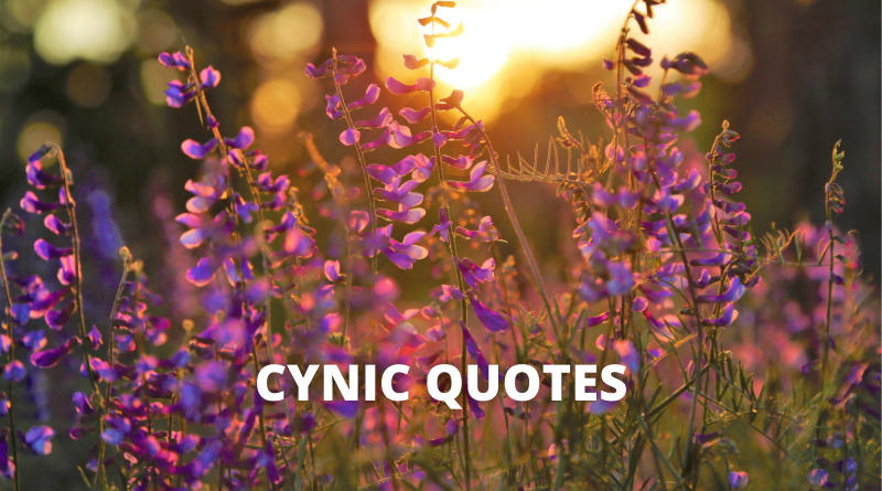 Cynic Quotes Featured