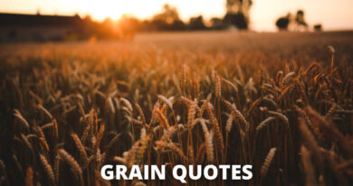 Grain Quotes Featured