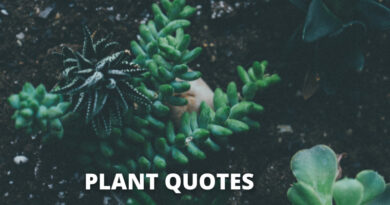 PLANTS QUOTES FEATURE