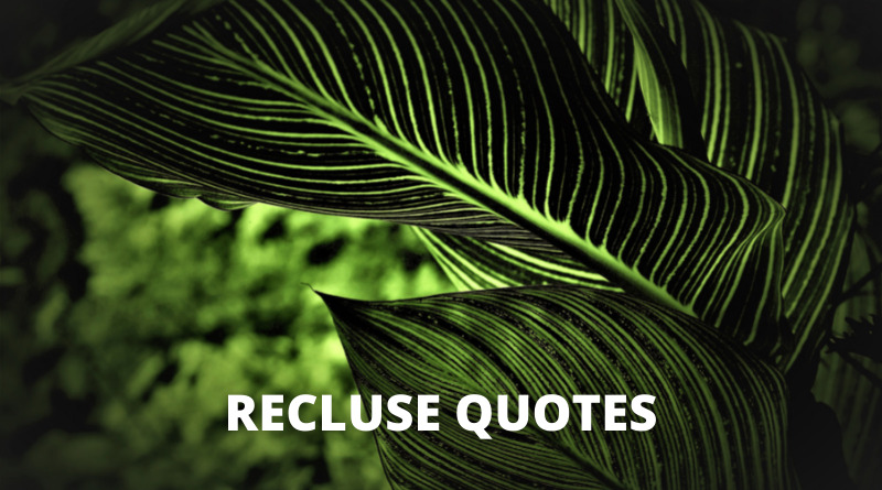 Recluse Quotes Featured