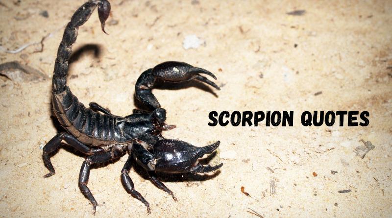 Scorpion Quotes Featured
