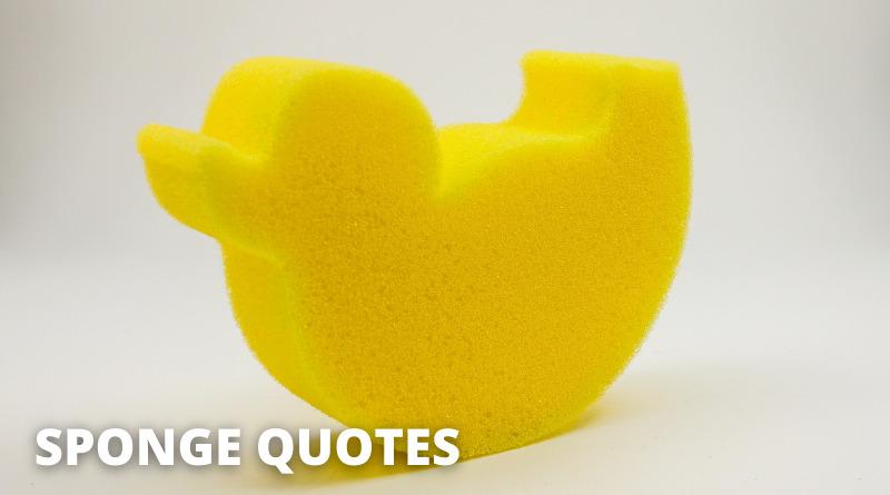 Sponge Quotes Featured