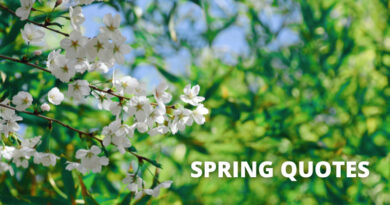Spring Quotes Featured