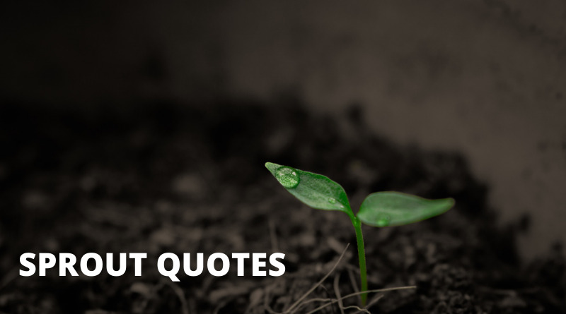 Sprout Quotes Featured