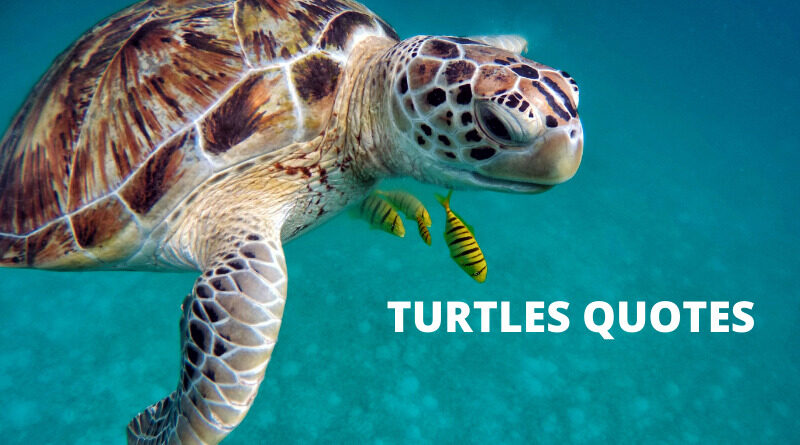 Turtle Quotes Featured