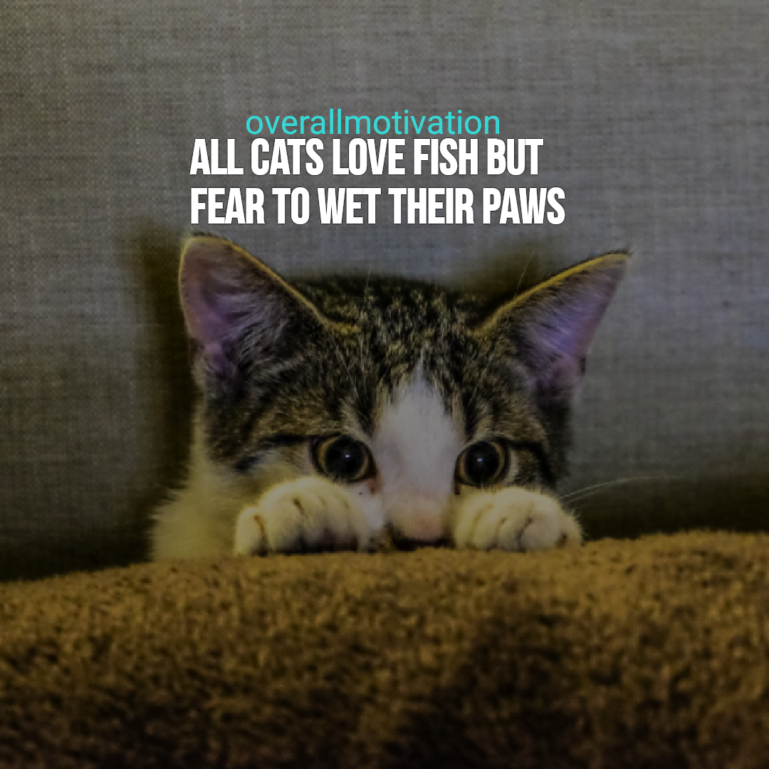 Chinese quotes all cats love fish