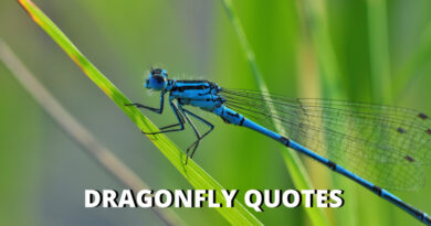 dragonfly quotes featured