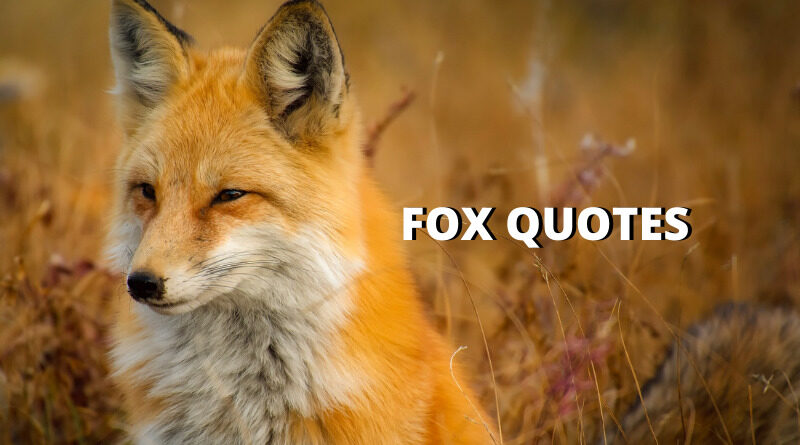 fox quotes featured