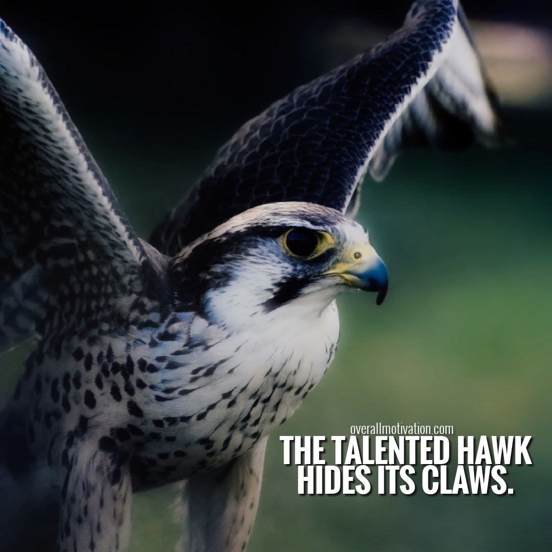 talented hawk Japanese Quotes inspirational